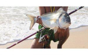 Pescar doradas